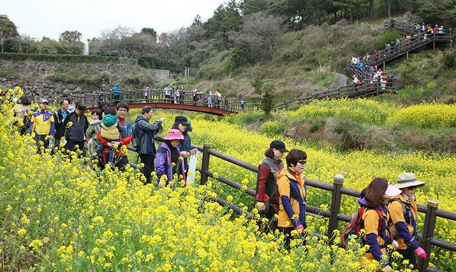 QIngming Festival Hiking Flower